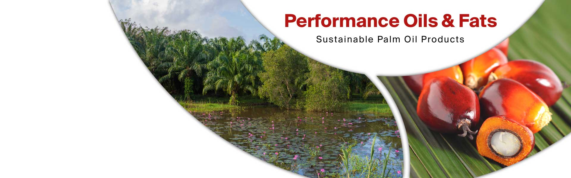 sustainable palm oil in bulk