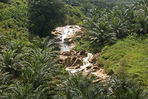 Deforestation-free sustainable palm oil