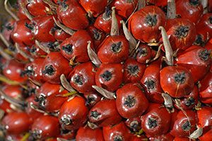 spott assessment palm oil companies